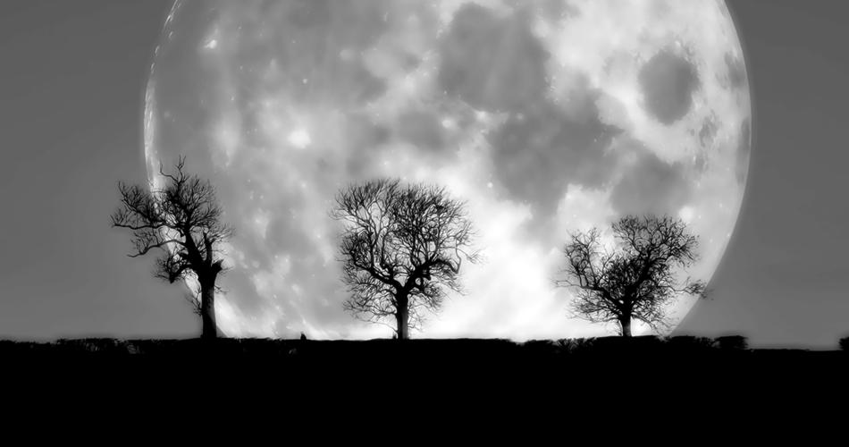 trees-58442.jpg